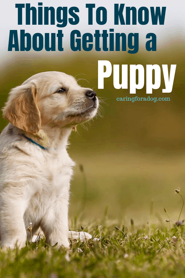 7 Things to know about getting a puppy.  What to consider before adding a puppy to your family for years of love! #puppies #dogs #caringfordogs