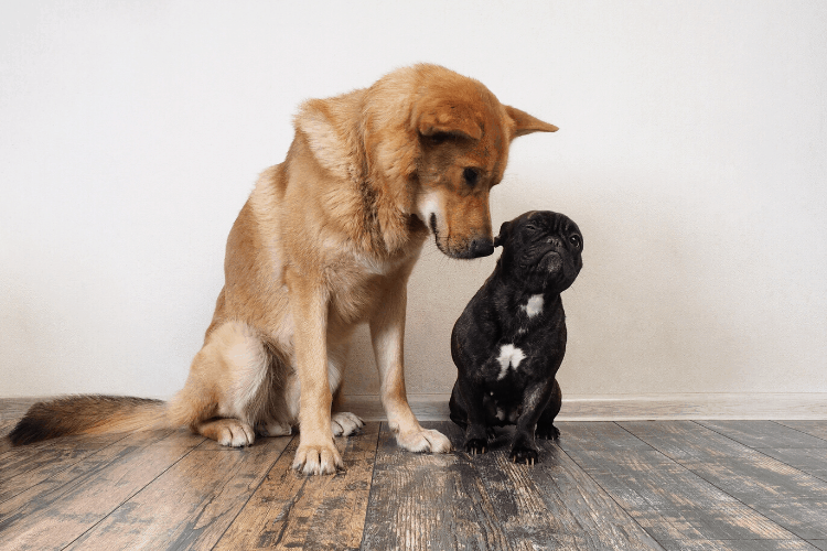 Choosing a dog - the size of the dog