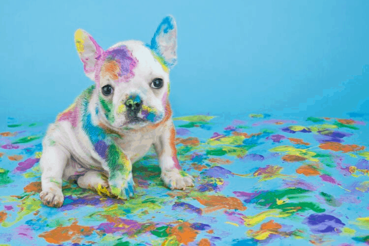 messy puppy in paint