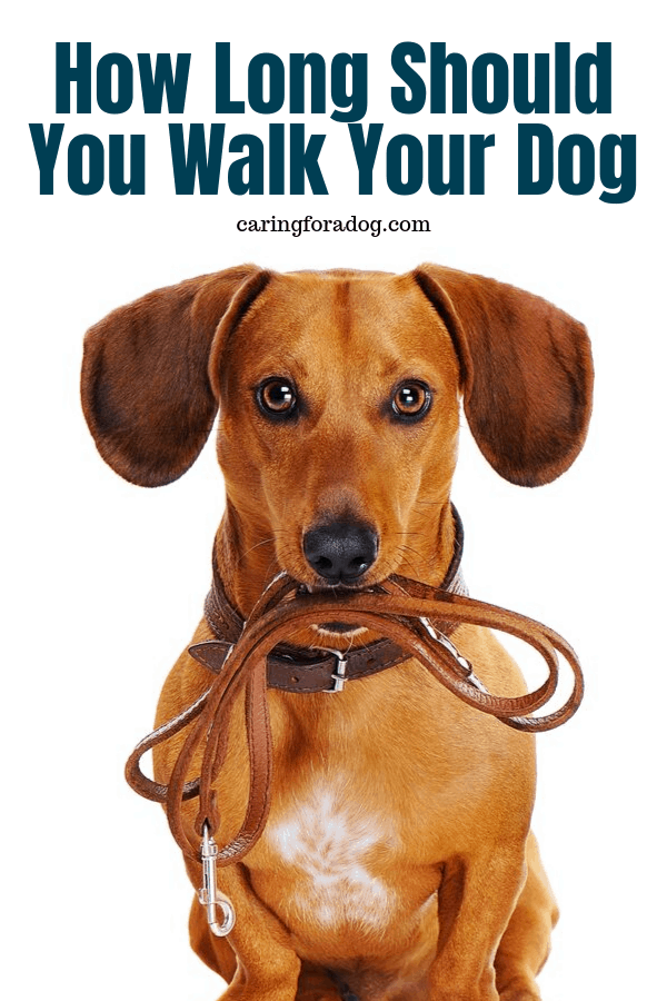 How Long Should You Walk Your Dog?  When is it enough and when is it too much.