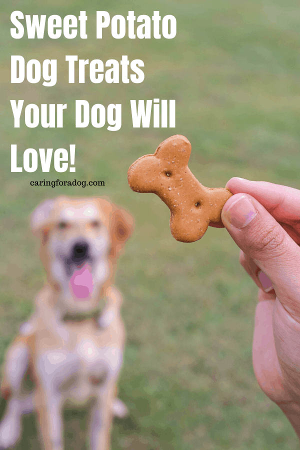 Sweet Potato Dog Treats Your Dog Will Love