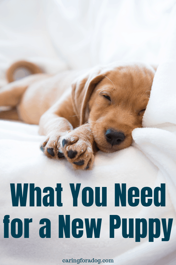 New puppy essentials - what you really need when you bring a new puppy home.
