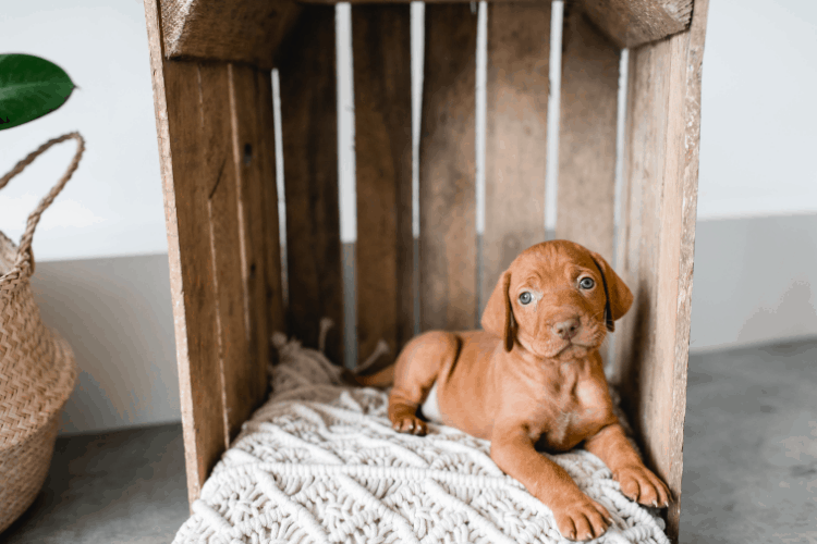 Should I crate my dog at night?  Tips to help you decide