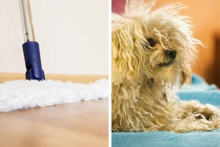 the best dust mop for dog hair