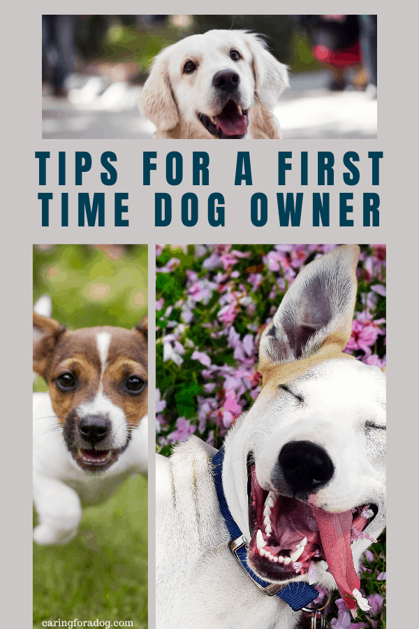 first time dog owner tips