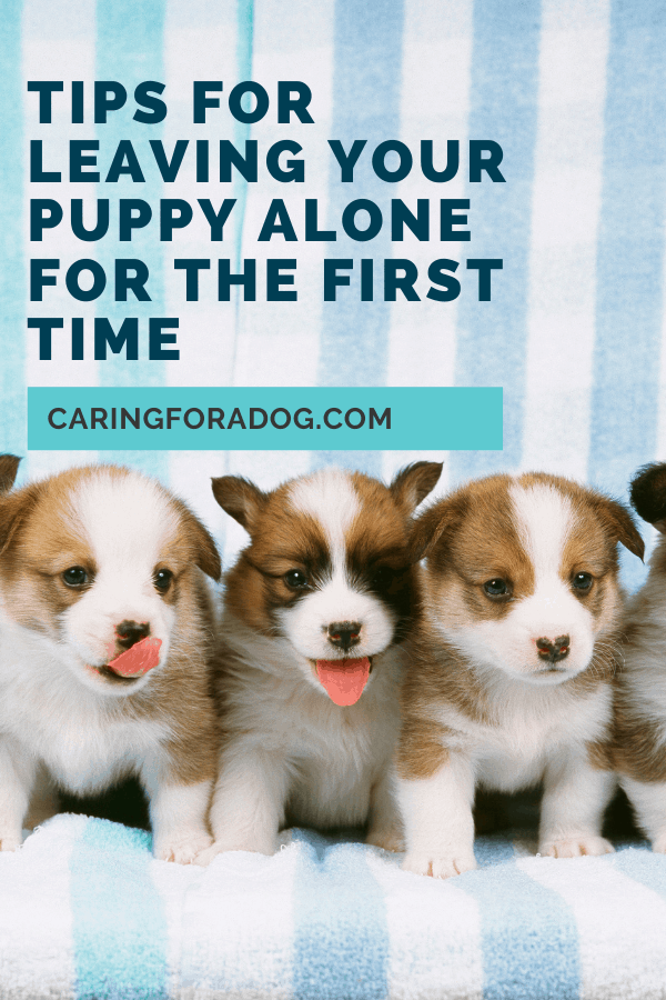 tips for leaving puppy alone for the first time