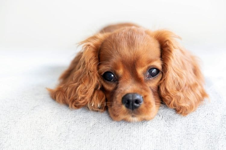 tips for leaving a puppy alone for the first time