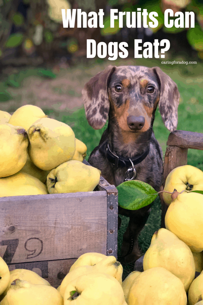 What Fruits Can Dogs Eat Safely?