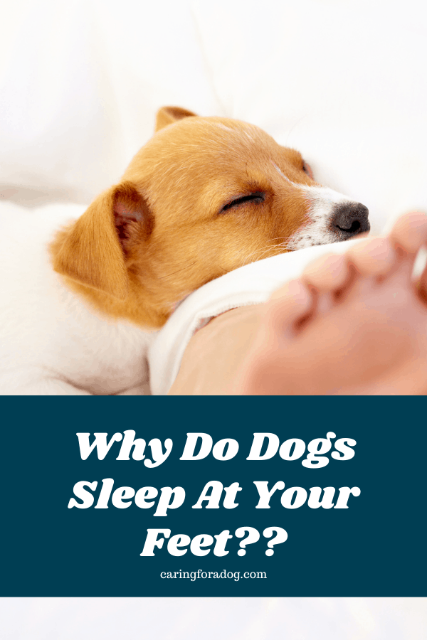 Why do Dogs Sleep at your feet?
