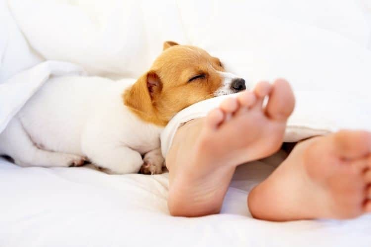 dogs sleeping at your feet