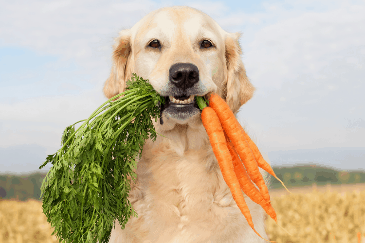 vegetables for dogs - which ones are safe