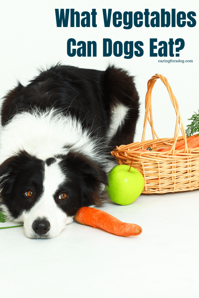 What Vegetables Can Dogs Eat?