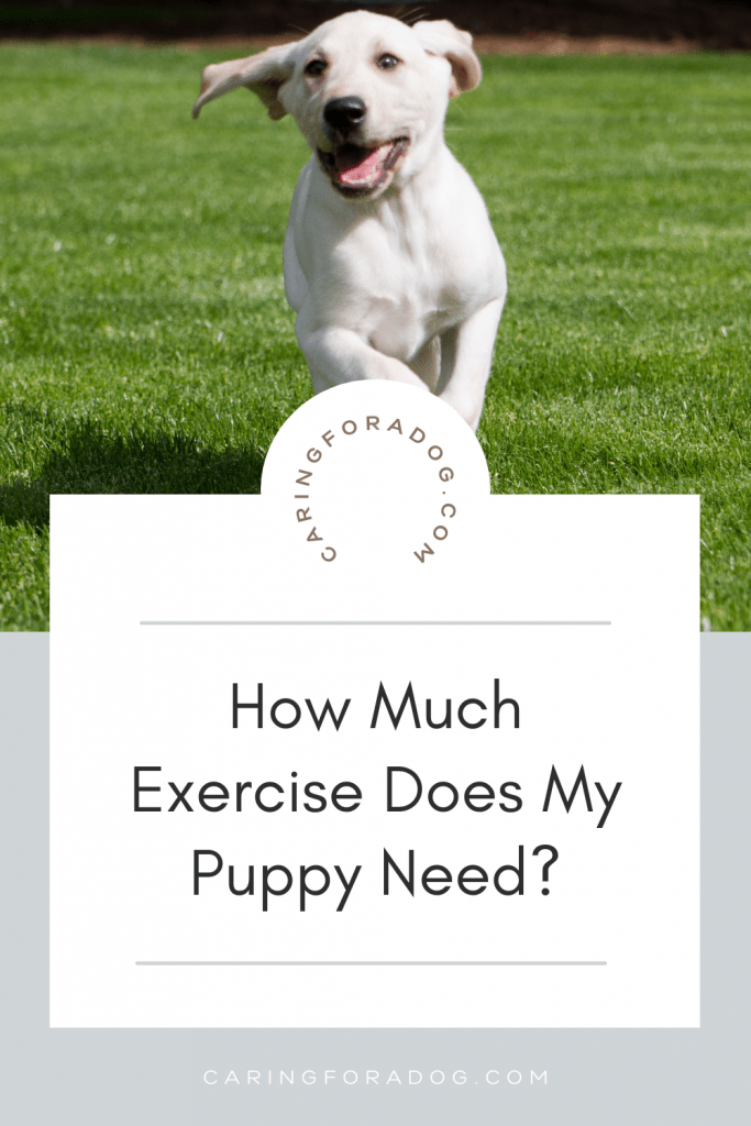how much exercise does a puppy need - white dog running