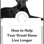 how to lengthen great dane's lifespan pin