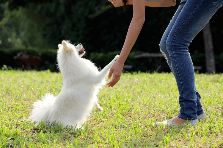 white dog training exercises