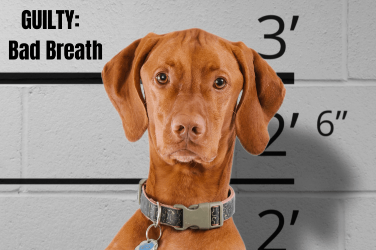bad breath in dogs - guilty dog face