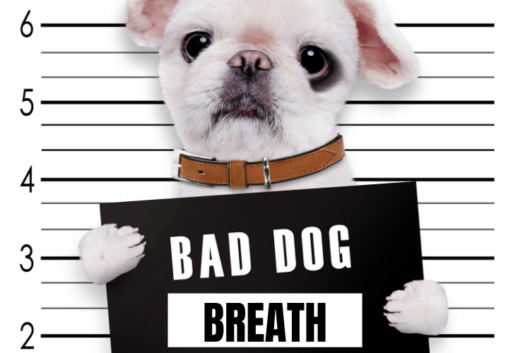 what causes bad breath in dogs