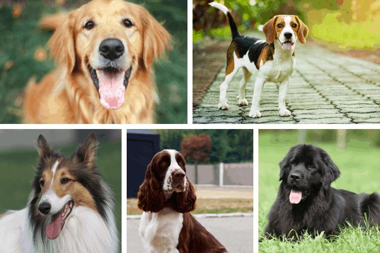 10 best dog breeds for scared children