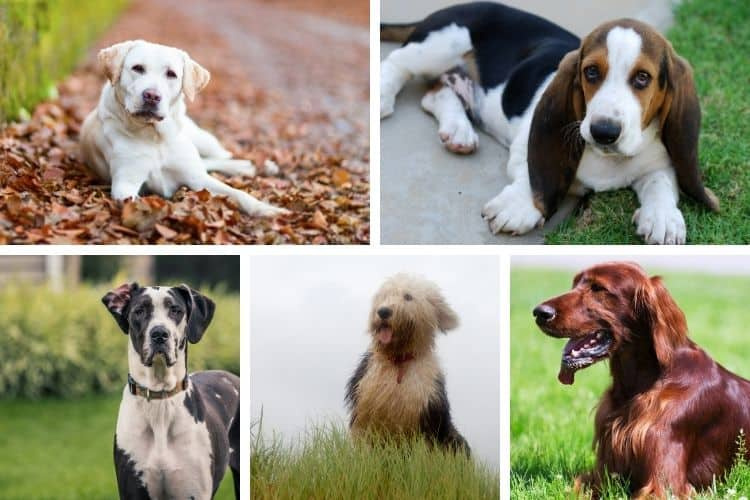 10 best dog breeds for children scared of dogs