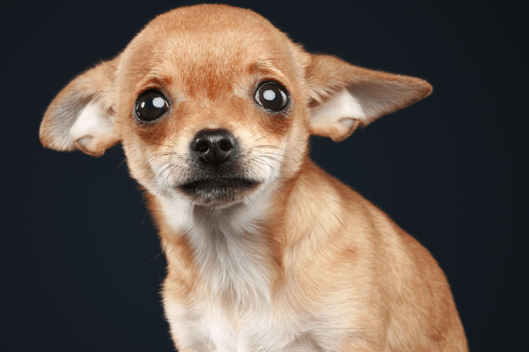 what you need to know about anxiety in dogs