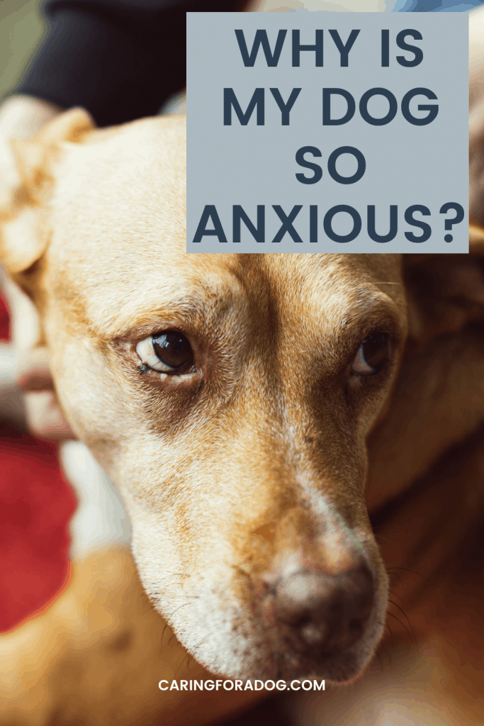 What you Need to Know About Anxiety in Dogs - What causes it, symptoms, and how to treat.